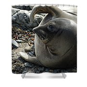 Elephant Seal Shower Curtain by Ernie Echols