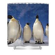 Emperor Penguins Antarctica Shower Curtain by Tui De Roy