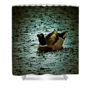 Escaping The Rain Shower Curtain by Loriental Photography