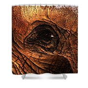 Eyes Through The Canyon Of Time Shower Curtain by Wingsdomain Art and Photography
