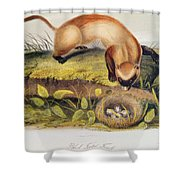 Ferret Shower Curtain by John James Audubon