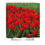Field Of Red Tulips Shower Curtain by Sharon Talson