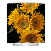 Five Sunflowers Shower Curtain by Garry Gay