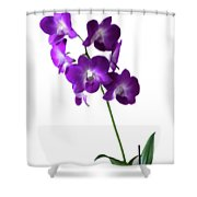 Floral Shower Curtain by Tom Prendergast