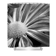 Flower Run Through It Black And White Shower Curtain by James BO  Insogna