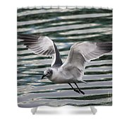 Flying Seagull Shower Curtain by Carol Groenen