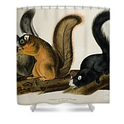 Fox Squirrel Shower Curtain by John James Audubon