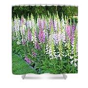 Foxglove Garden Shower Curtain by Carol Groenen