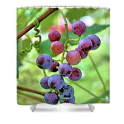Fruit Of The Vine Shower Curtain by Kristin Elmquist