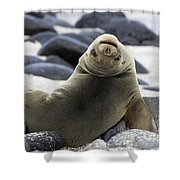Galapagos Sea Lion Shower Curtain by David Hosking and Photo Researchers