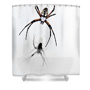 Garden Spider with shadow Shower Curtain by Tamyra Ayles