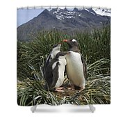 Gentoo Penguin And Young Chicks Shower Curtain by Suzi Eszterhas