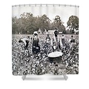 Georgia Cotton Field - C 1898 Shower Curtain by International  Images