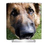 German Shepherd Dog Shower Curtain by Fabrizio Troiani
