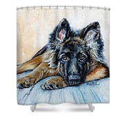 German Shepherd Shower Curtain by Enzie Shahmiri