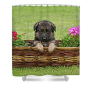 German Shepherd Puppy in Basket Shower Curtain by Sandy Keeton