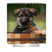 German Shepherd Puppy In Planter Shower Curtain by Sandy Keeton