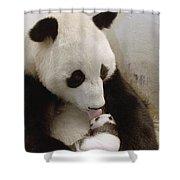 Giant Panda Ailuropoda Melanoleuca Xi Shower Curtain by Katherine Feng