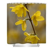 Golden Forsythia Shower Curtain by Kathy Clark