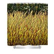 Golden Grasses Shower Curtain by Meirion Matthias