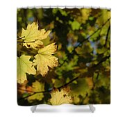 Golden Morning Shower Curtain by Trish Hale