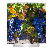 Grapes Ready For Harvest Shower Curtain by Garry Gay