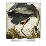 Great Blue Heron Shower Curtain by John James Audubon
