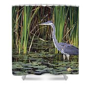 Great Blue Heron Shower Curtain by Natural Selection David Spier