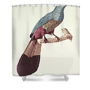 Great Touraco Shower Curtain by Jacques Barraband