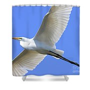 Great White Egret In Flight . 40D6850 Shower Curtain by Wingsdomain Art and Photography