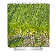 Green Algae On Rock Shower Curtain by Kenneth Albin