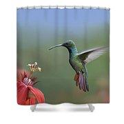 Green Breasted Mango Hummingbird Male Shower Curtain by Tim Fitzharris