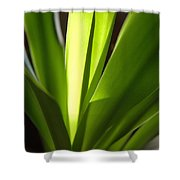 Green Patterns Shower Curtain by Jerry McElroy