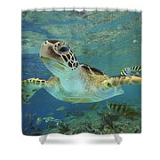 Green Sea Turtle Chelonia Mydas Shower Curtain by Tim Fitzharris