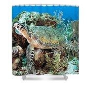 Green Sea Turtle On Caribbean Reef Shower Curtain by Karen Doody