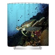 Green Sea Turtle Resting On A Plate Shower Curtain by Mathieu Meur