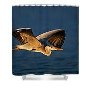 Grey Heron In Flight Shower Curtain by Johan Swanepoel