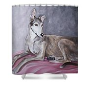 Greyhound At Rest Shower Curtain by George Pedro