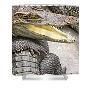 Group Of Crocodiles Shower Curtain by Jorgo Photography - Wall Art Gallery