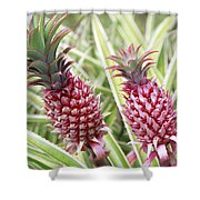 Growing Red Pineapples Shower Curtain by Brandon Tabiolo - Printscapes