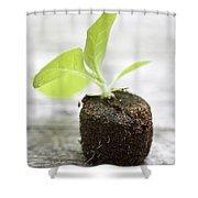 Growth Shower Curtain by Frank Tschakert