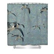Gulls Shower Curtain by James W Johnson