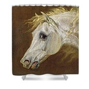 Head Of A Grey Arabian Horse  Shower Curtain by Martin Theodore Ward