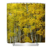 Heavenly Light Shower Curtain by Donna Blackhall