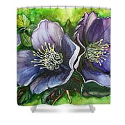 Helleborous Blue Lady Shower Curtain by Karin  Dawn Kelshall- Best