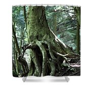 Hold On To Me.  Shower Curtain by Amanda Barcon