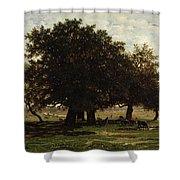 Holm Oaks Shower Curtain by Pierre Etienne Theodore Rousseau