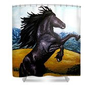 Horse Oil Painting Shower Curtain by Natalja Picugina