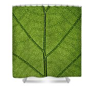 Hydrangea Leaf Shower Curtain by Steve Gadomski