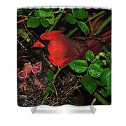 I Have My Eye On You Shower Curtain by Frozen in Time Fine Art Photography